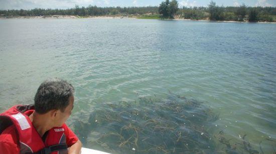 华南师范大学生命科学学院教授江海声在观察黎安港内一片海草床